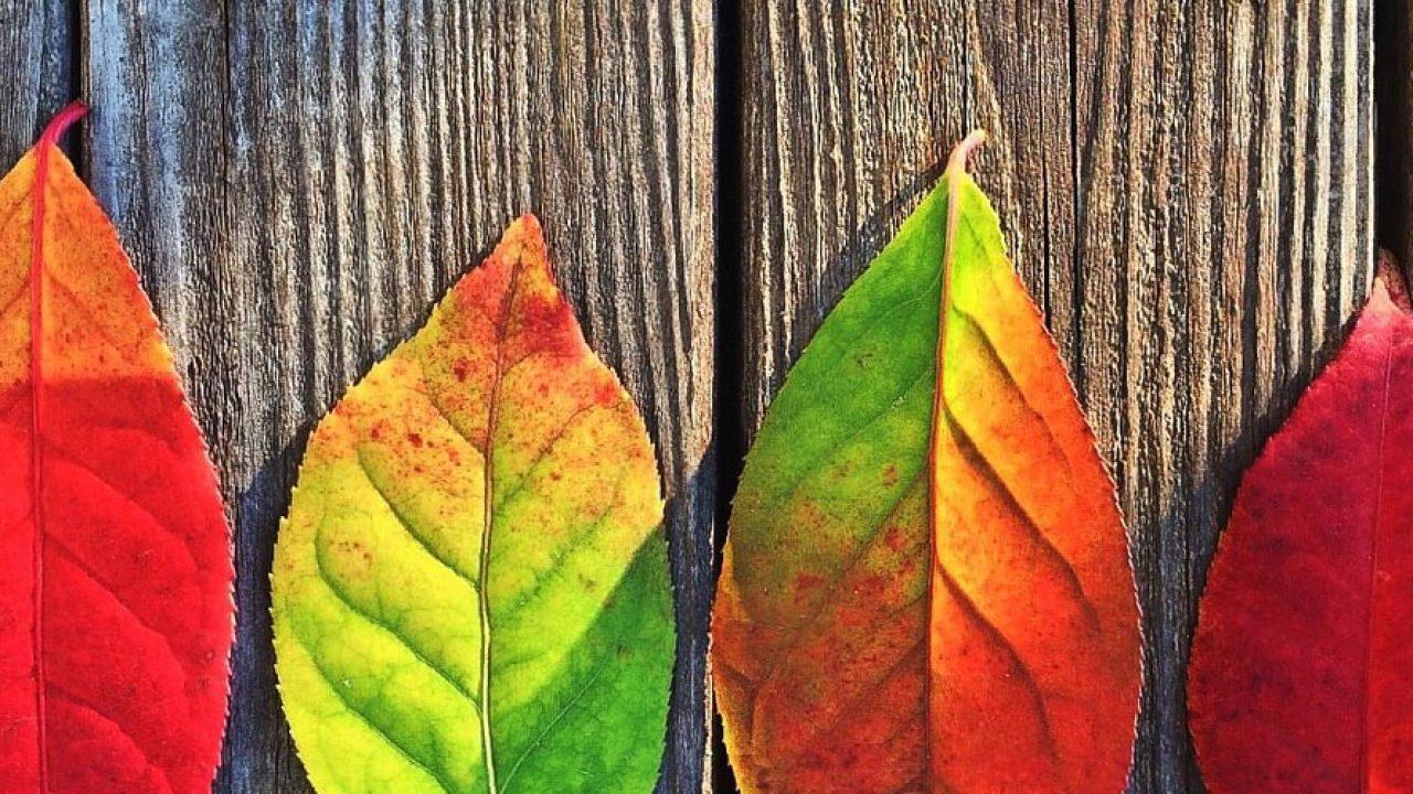 Psicología Del Color Estímulos Para Aprender En Ambientes